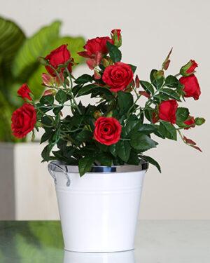 Blumentopf Rote Rosen - Dekoblumen imTopf - Natürliche Optik Dekopflanze Kunstblumen