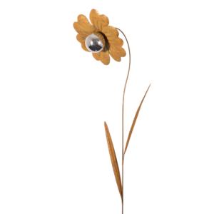 Edelrostblume MIRROR Heide-Nelke S