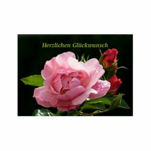 Doppelkarte Herzlichen Glückwunsch - Rosenmotiv K0438