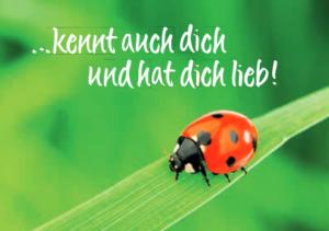 Kinderlied Weißt du, wie viel Sternlein stehen -Textkarte -Klappkarte Marienkäfer Glückskäfer Karte mit Liedtext